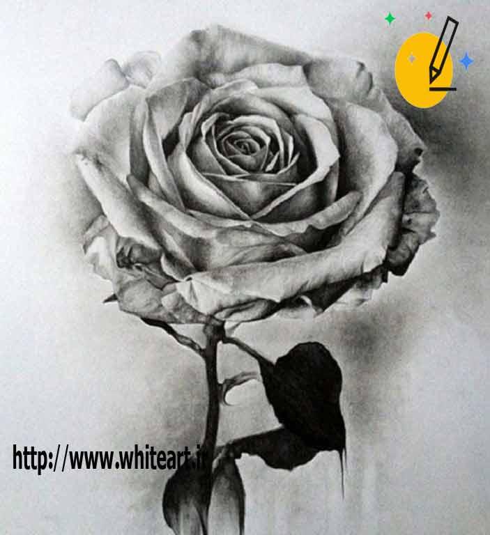 طراحی سیاه قلم گل