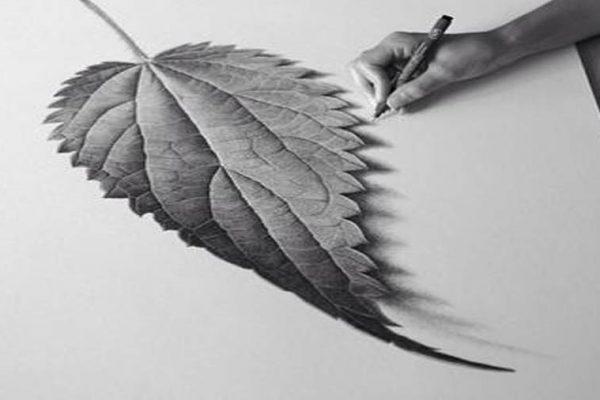 طراحی سیاه قلم برگ درخت